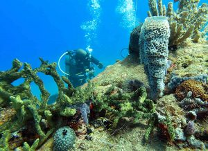 SCUBA Diving in Saint Lucia Marine Reserve