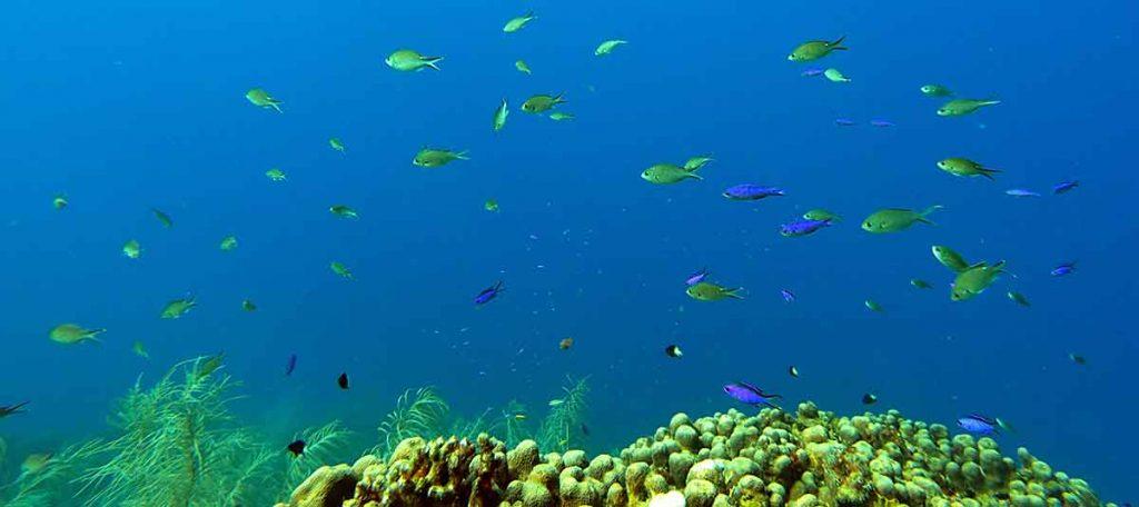 SCUBA Diving in Saint Lucia Underwater Park