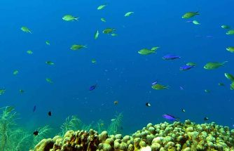SCUBA Diving in Saint Lucia Underwater Park
