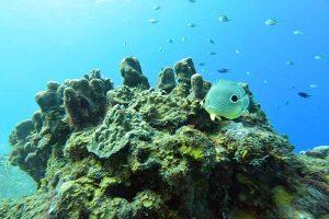 Saint Lucia Marine Park Reserve