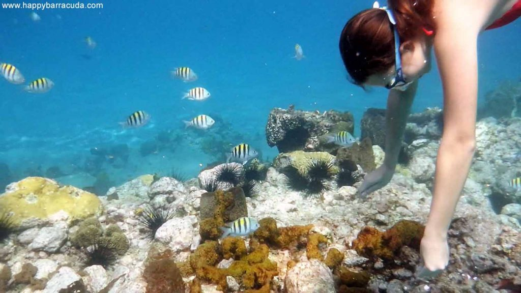 St. Lucia, Anse Chastanet Beach, underwater life